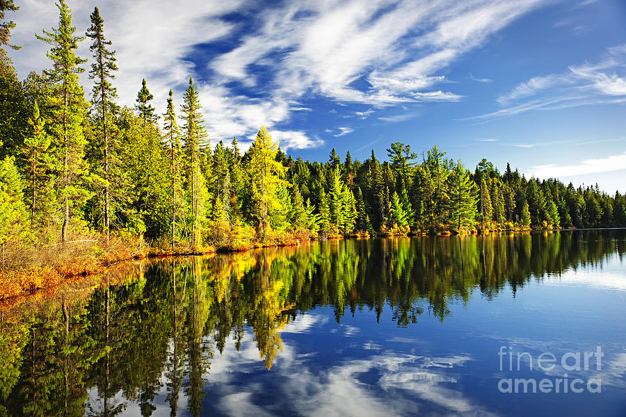 Forest Reflecting In Lake Photograph