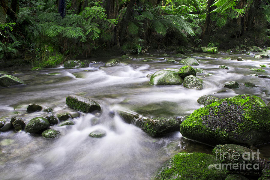 Forest River Photograph  - Forest River Fine Art Print