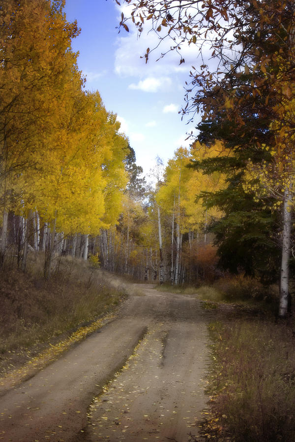 Forest Road In Autumn Photograph