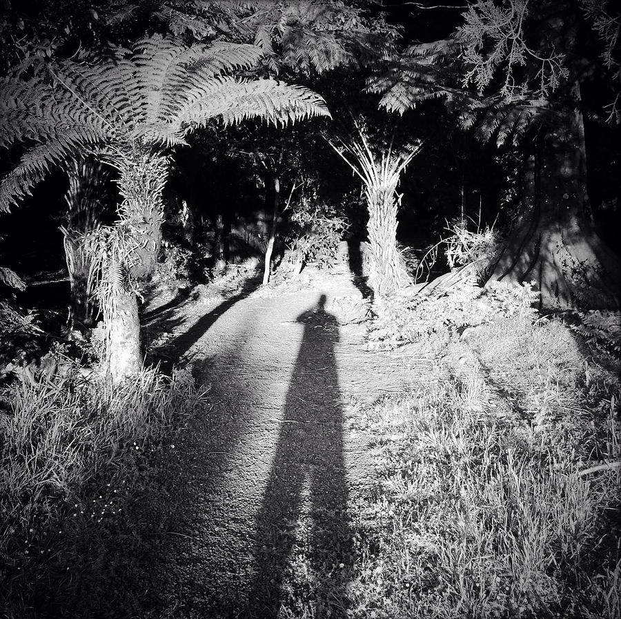 Silhouette Photograph - Forest Shadow by Les Cunliffe