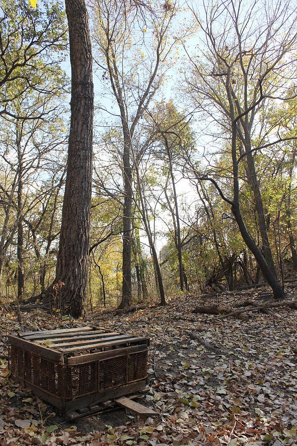 Forgotten Creek Photograph