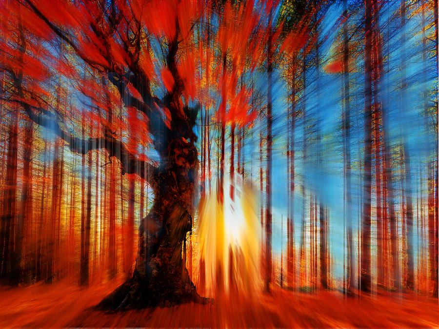Color Painting - Forrest And Light by Tony Rubino