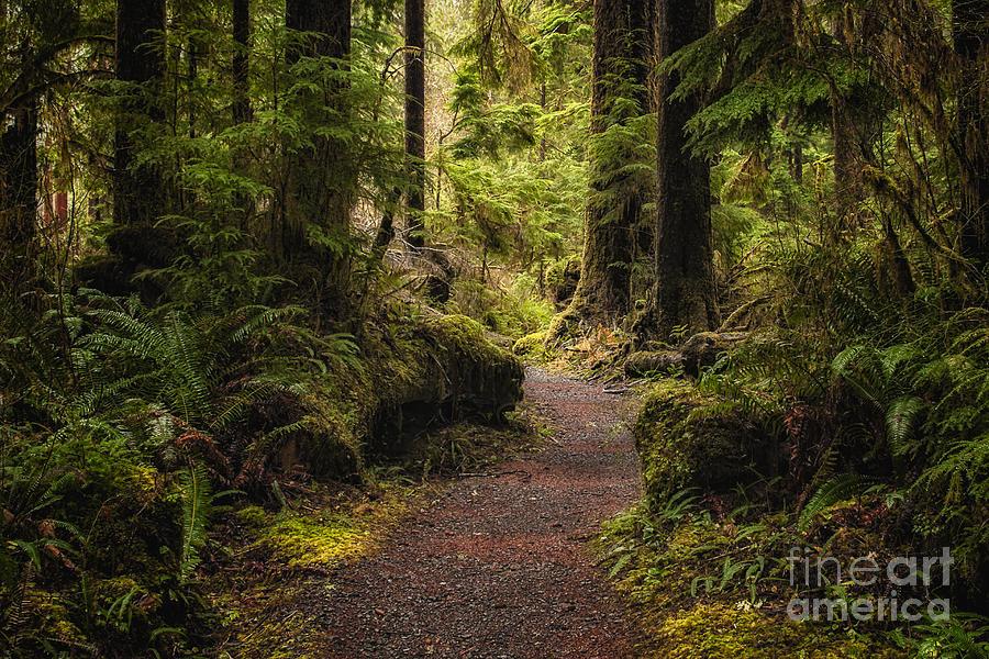 Forest Walk Photograph
