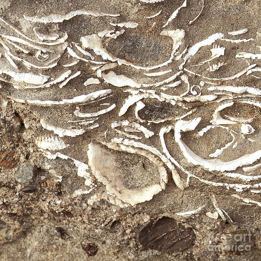 Fossils Layered In Sand And Rock Photograph