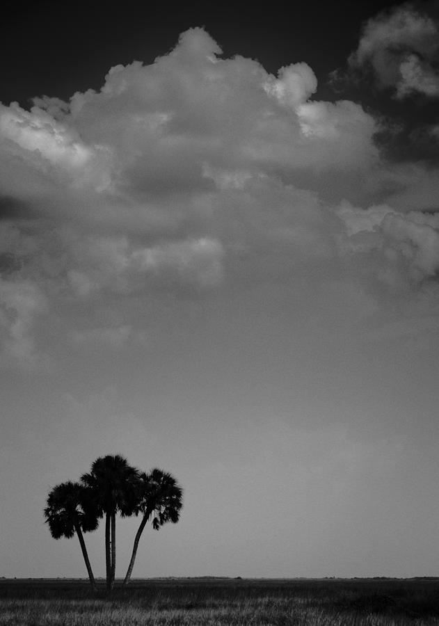 Four Palms Photograph