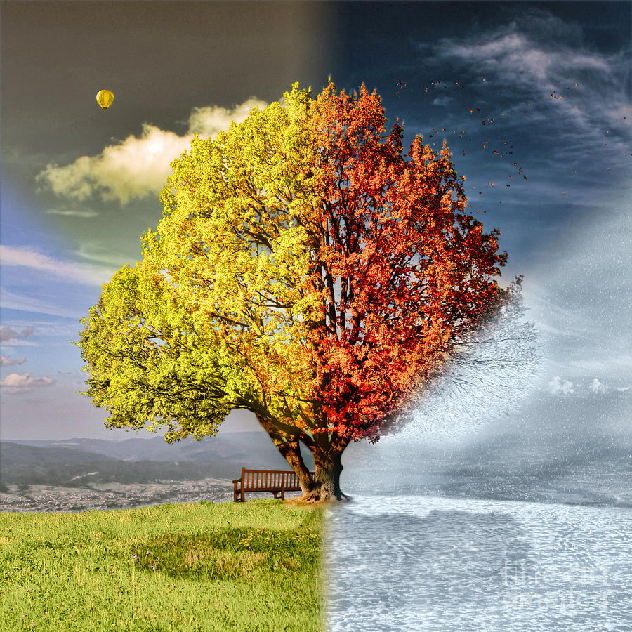 Four Seasons Tree Photograph  - Four Seasons Tree Fine Art Print