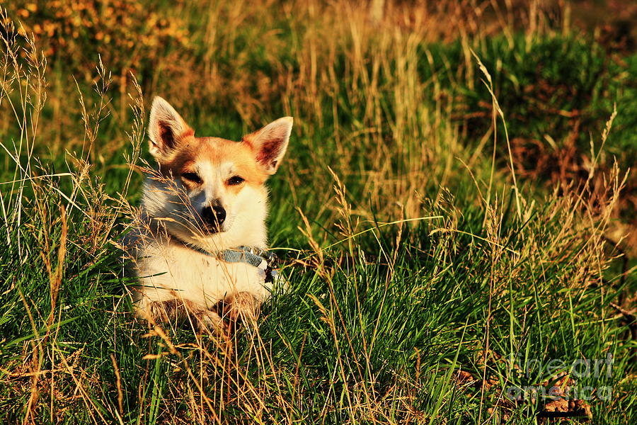 Fox Terrier In Landscape Photograph