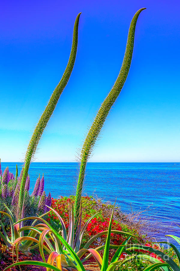 Foxtails On The Pacific Photograph  - Foxtails On The Pacific Fine Art Print