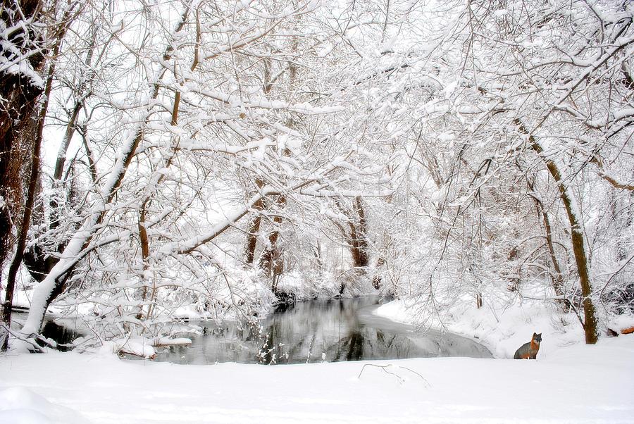 Foxy Snow Photograph