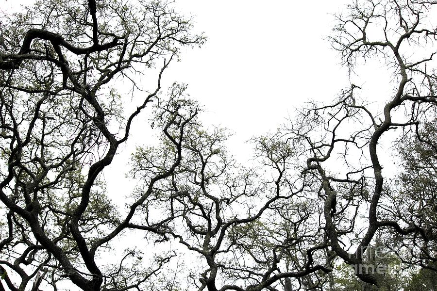 Branches Photograph - Fractal Branches by Theresa Willingham