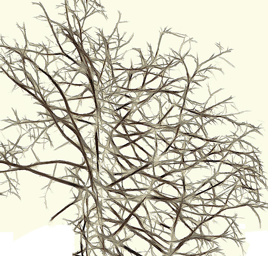 Fractal Ghost Tree - Inverted Photograph