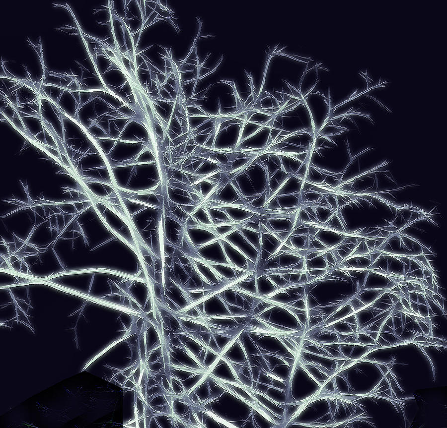 Fractal Ghost Tree Photograph  - Fractal Ghost Tree Fine Art Print