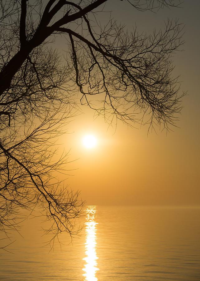 Golden Photograph - Framing The Golden Sun by Georgia Mizuleva