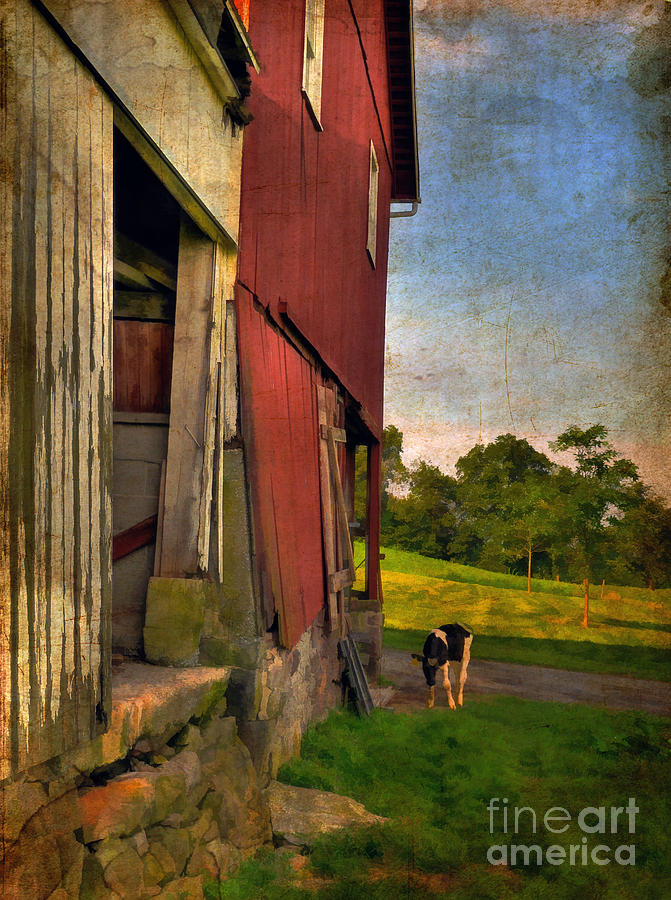Animals Photograph - Free Range by Lois Bryan