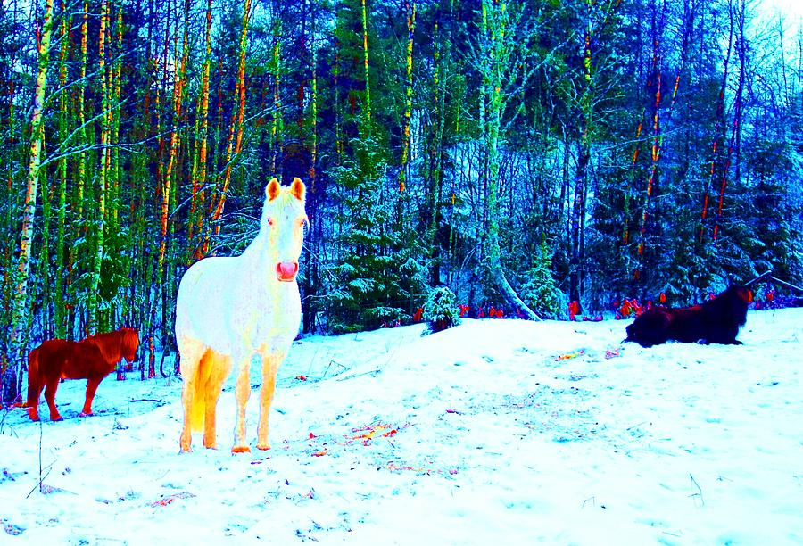 Free Spirits Photograph