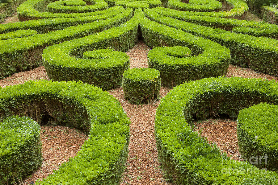 French Boxwood Garden Photograph by Brian Jannsen