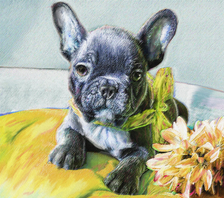 French Bulldog Puppy Digital Art