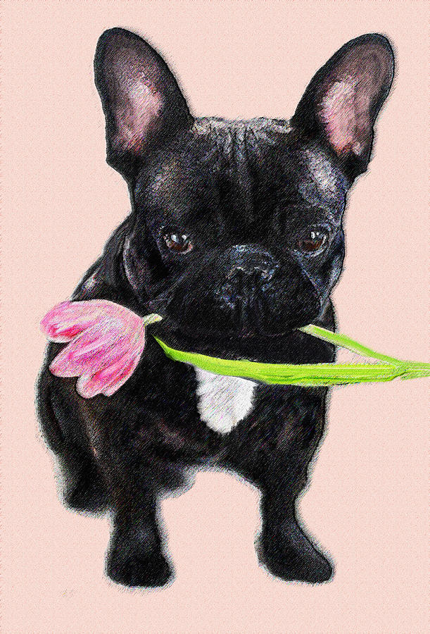 French Bulldog With Tulip Digital Art  - French Bulldog With Tulip Fine Art Print