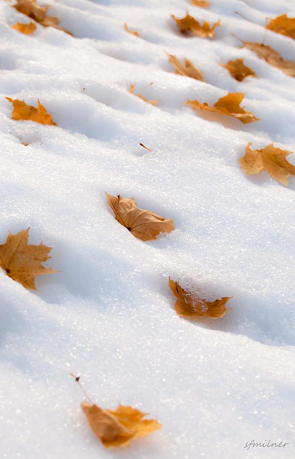 Leaves Photograph - Fresh Fallen by Steven Milner