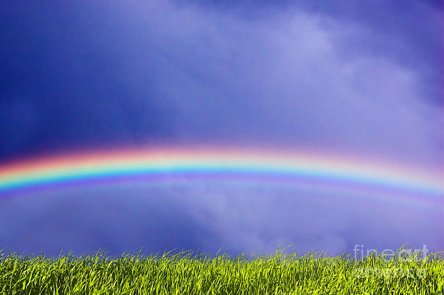Fresh Grass And Sky With Rainbow Photograph