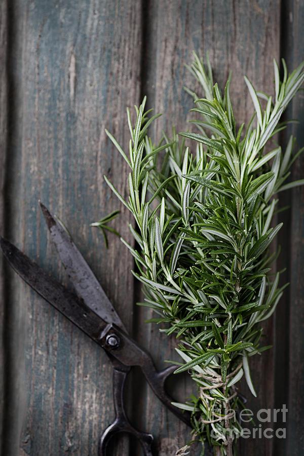 Fresh Herbs Photograph