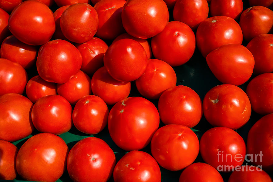 Fresh Ripe Red Tomatoes Photograph  - Fresh Ripe Red Tomatoes Fine Art Print