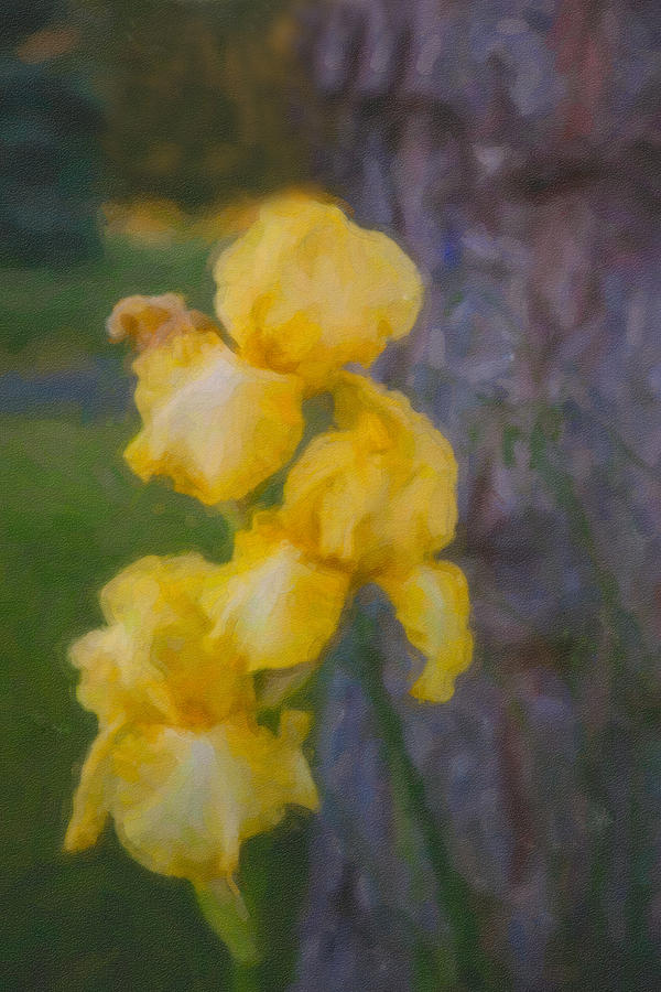 North Cascades Painting - Friendly Yellow Irises by Omaste Witkowski