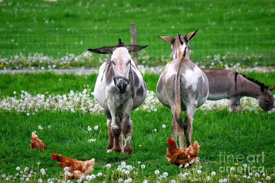Farm Photograph - Friends by Dawn  De Vos
