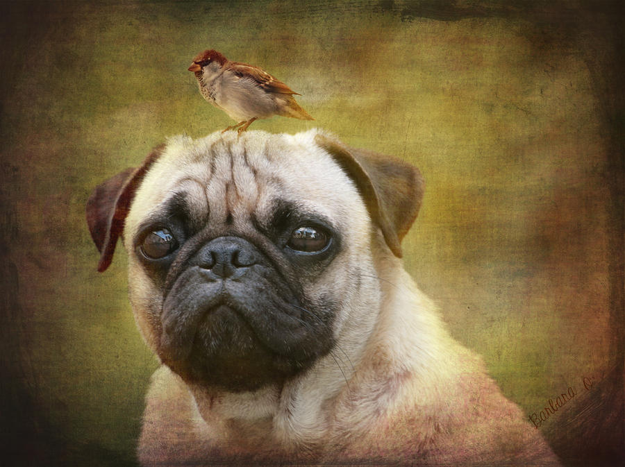 Friends Like Pug And Bird Photograph  - Friends Like Pug And Bird Fine Art Print