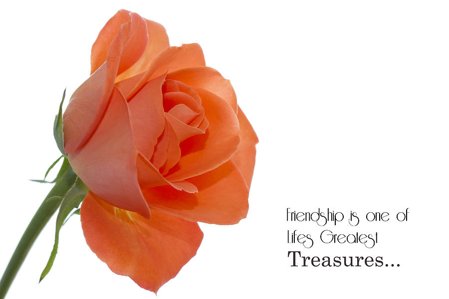 Friendship Treasures Photograph  - Friendship Treasures Fine Art Print