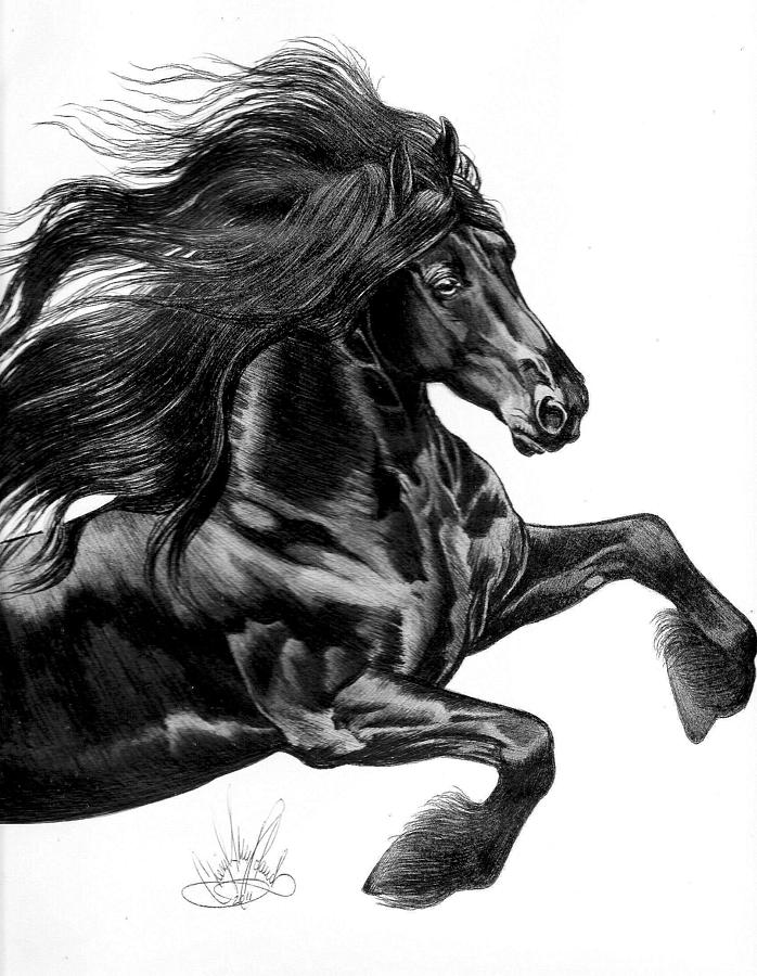 Black horse head drawing - photo#25