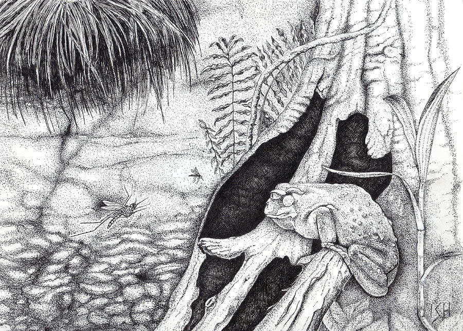 Dead Stump Drawing - Frog And Mosquitoes by Inger Hutton