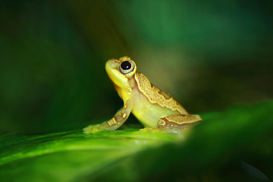 Frog Dreams Photograph