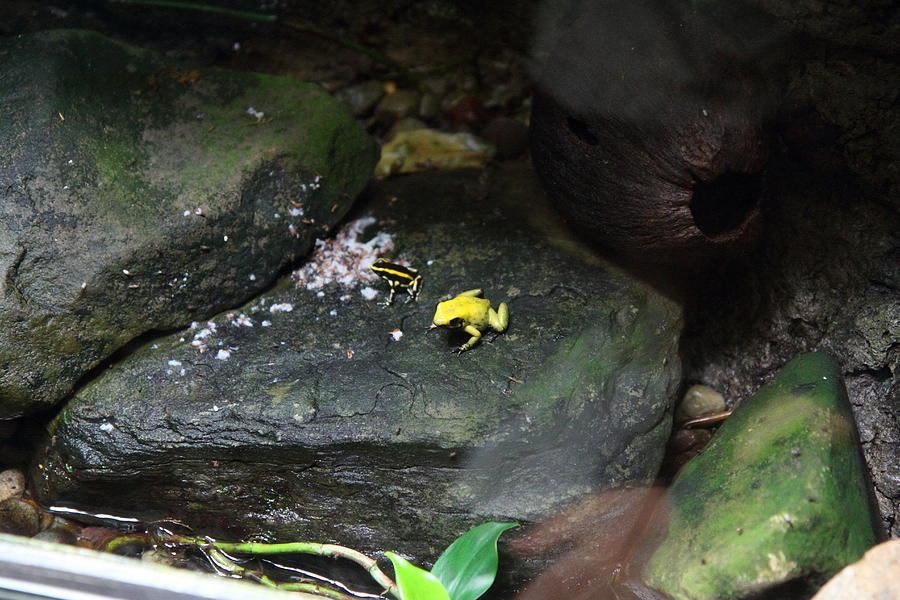 Inner Photograph - Frog - National Aquarium In Baltimore Md - 12125 by ...
