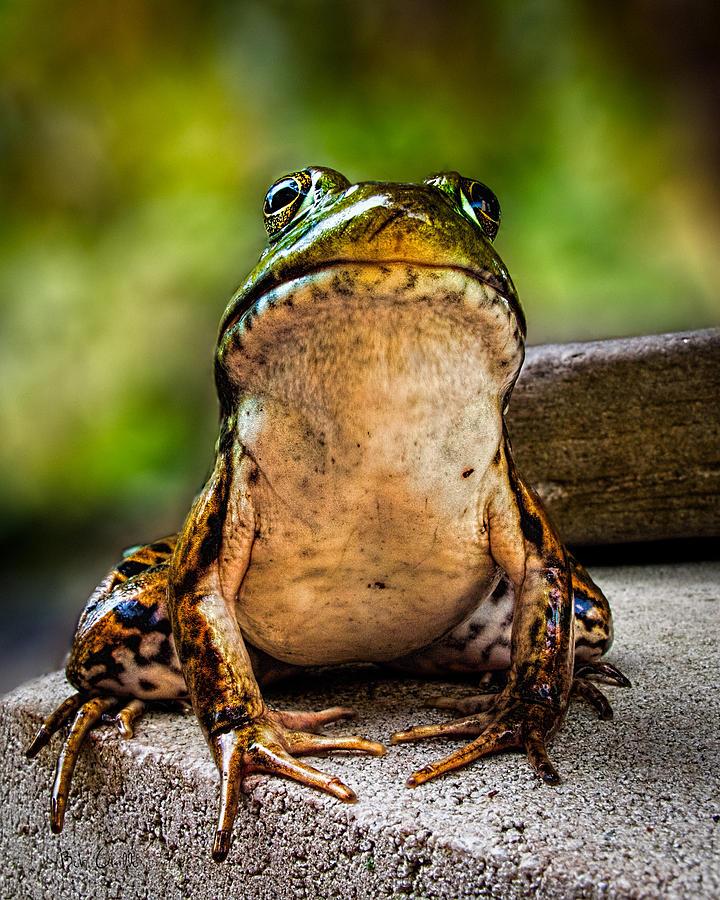 Frog Photograph - Frog Prince Or So He Thinks by Bob Orsillo