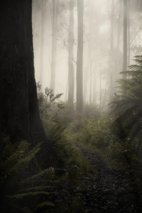 Fog Photograph - From Darkness by Amy Weiss