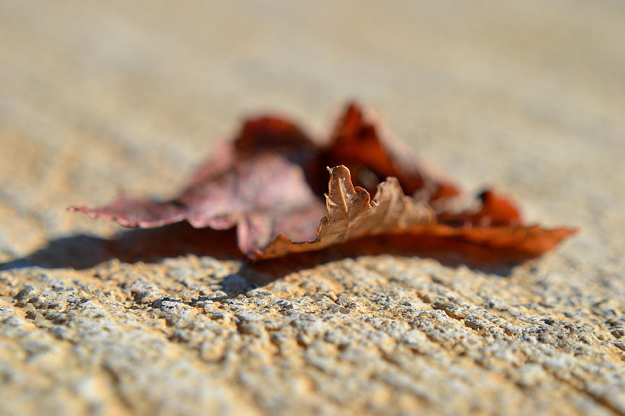 Autumn Photograph - From My Heart by Melanie Moraga