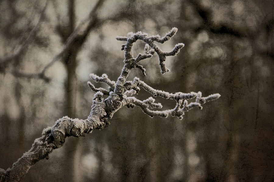 Frost Dragon Photograph