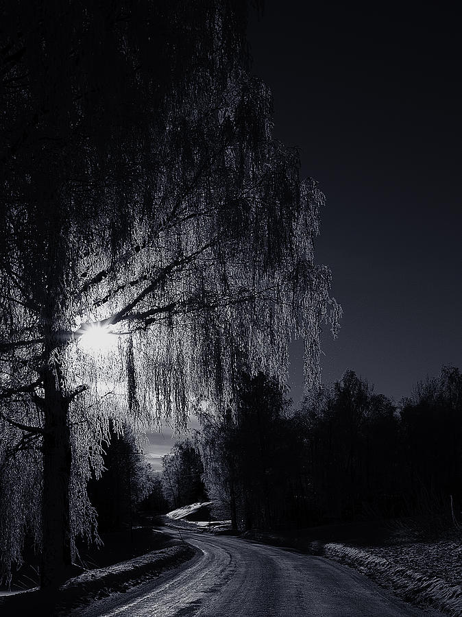 Frost Night Photograph  - Frost Night Fine Art Print