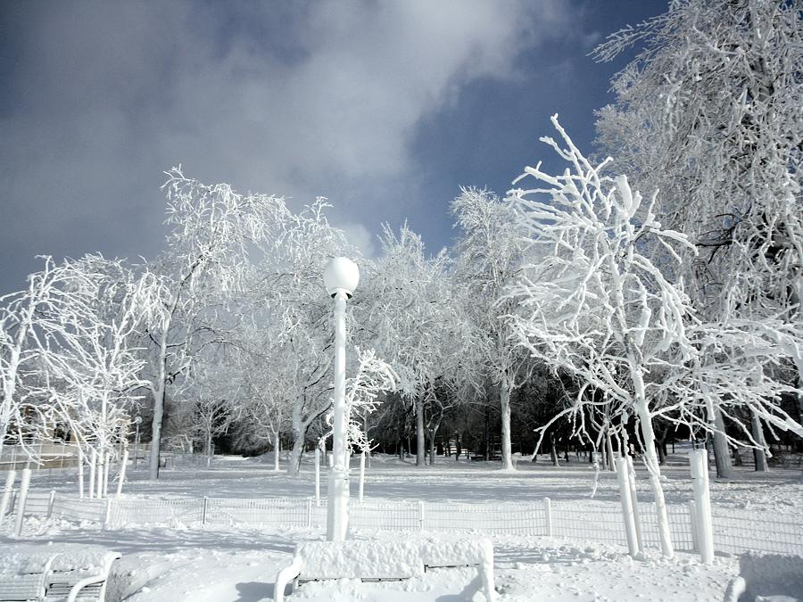 Frosted Photograph