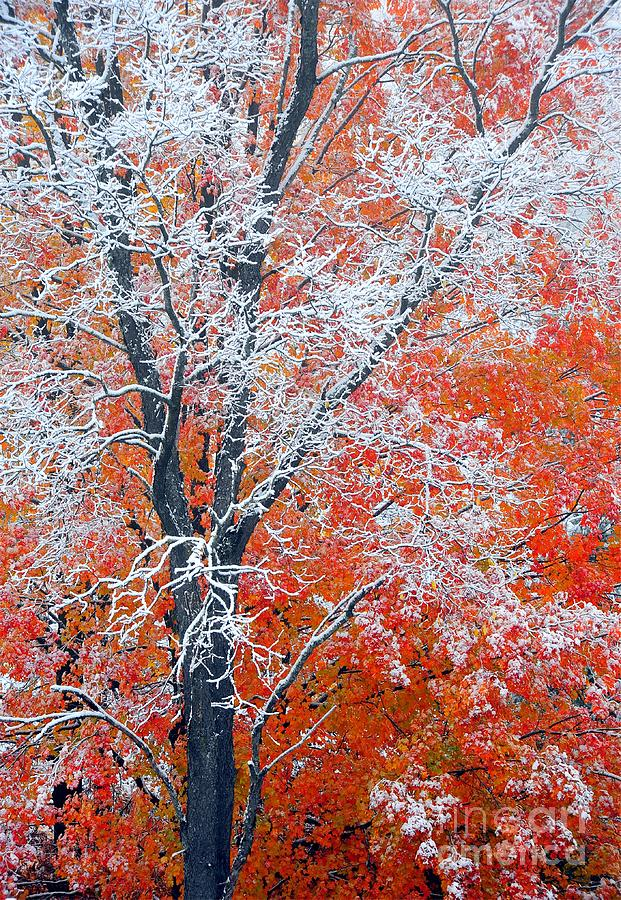Frosted Orange Photograph  - Frosted Orange Fine Art Print