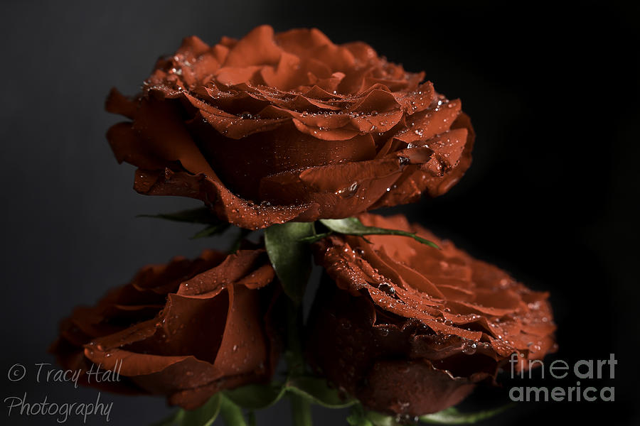 Red Photograph - Frosted Roses by Tracy  Hall