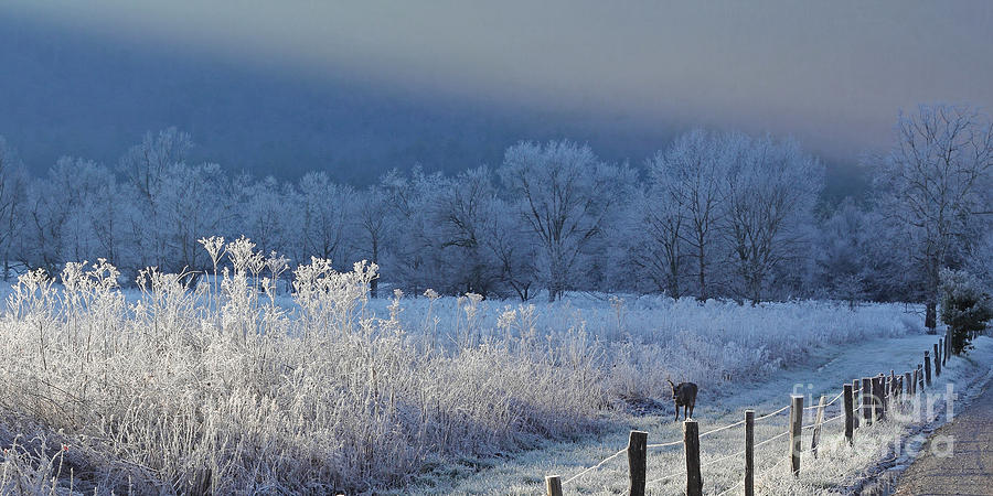 Frosty Cades Cove Shoot Photograph