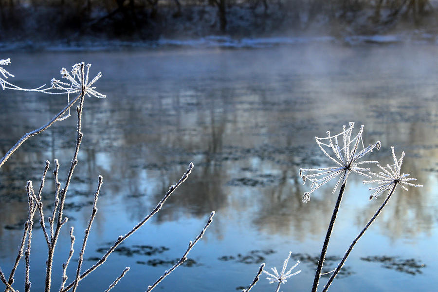Frosty Webs And Weeds Painting