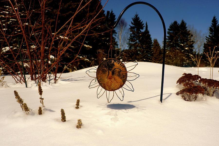 Frozen Garden Photograph