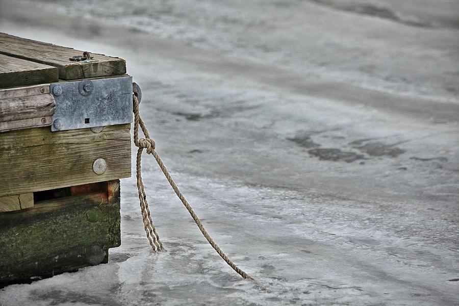 Frozen Photograph - Frozen by Karol Livote