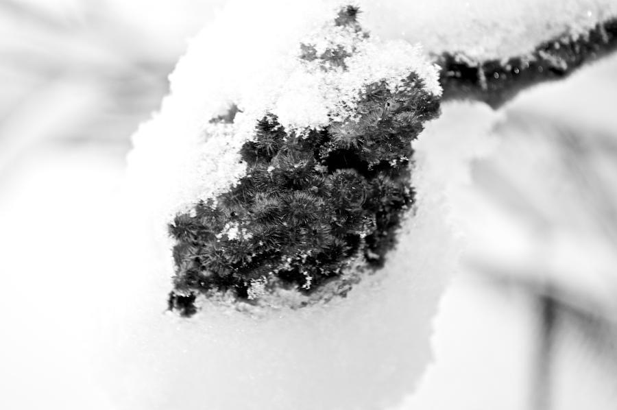 Frozen Seeds  Photograph