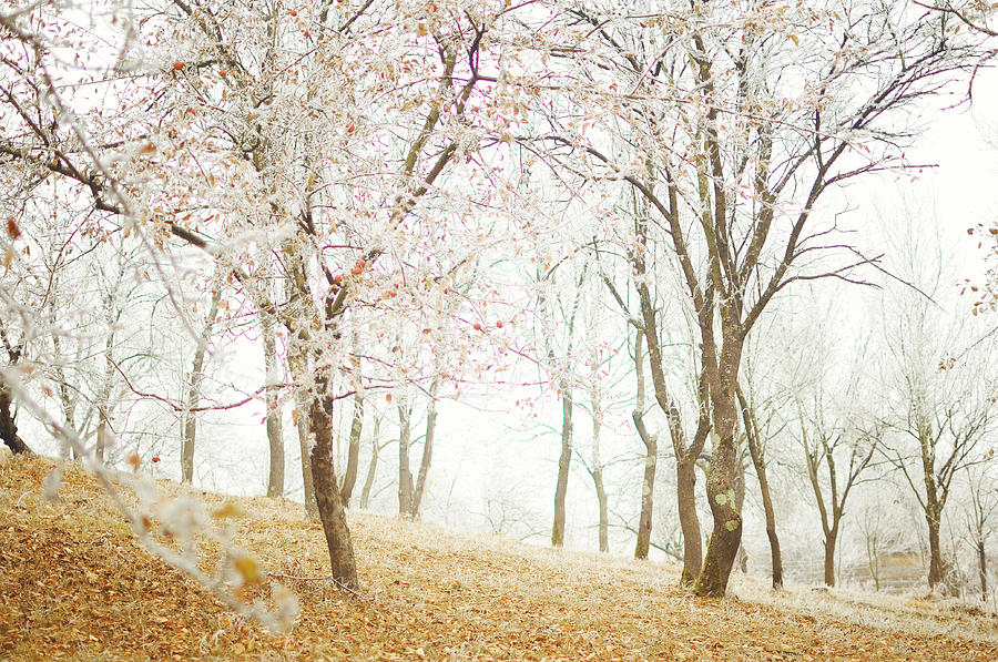 Landscape Photograph - Frozen Spring by Silvia Floarea Toth