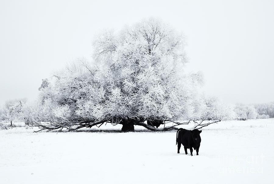 Winter Photograph - Frozen World by Mike  Dawson