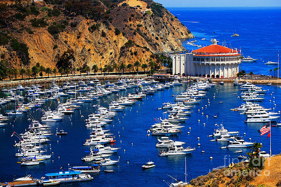 Avalon Photograph - Full Bay by Cheryl Young